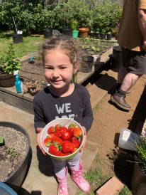 Pyper and Strawberries